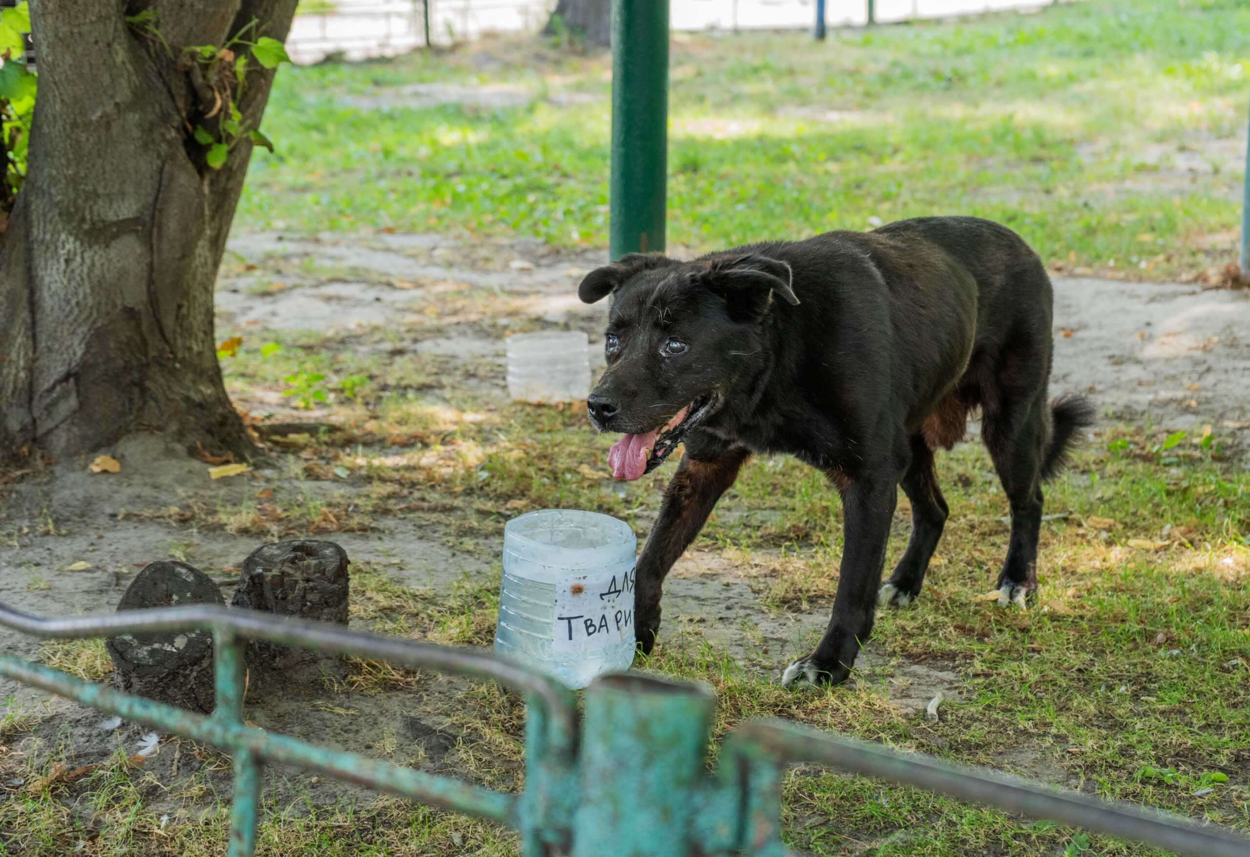 Стерилізація безпритульних собак